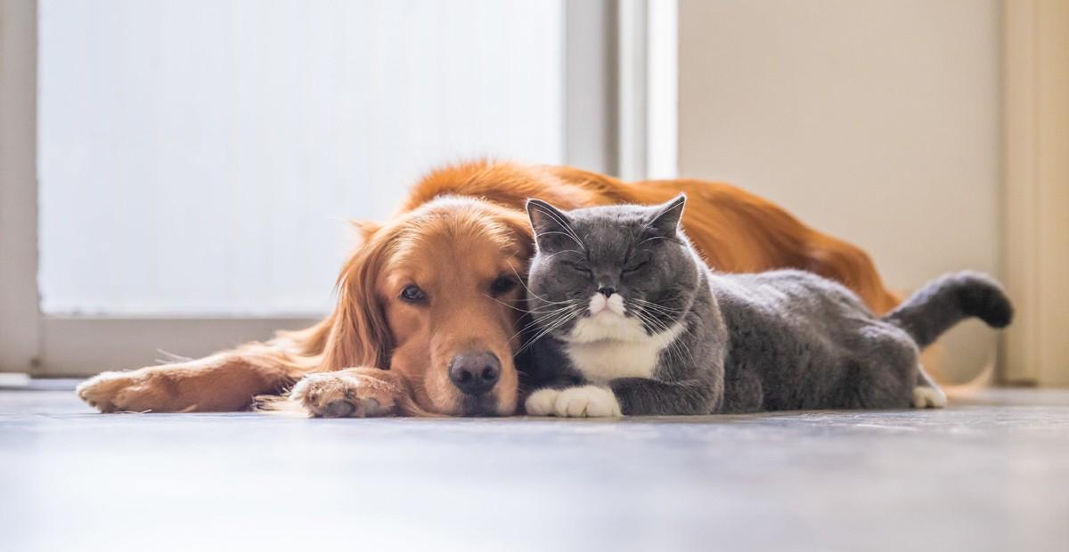 دراسات علمية: الحيوانات الأليفة تهدد حياة الإنسان بأخطر الأوبئة