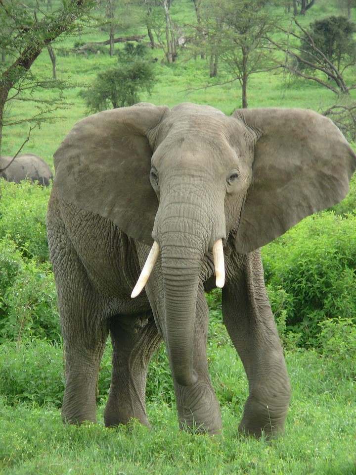 قطيع من الفيلة علي شاطئ بحيرة فيكتوريا