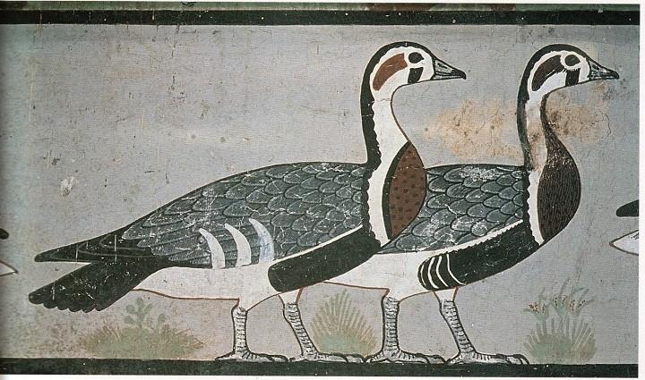 الإوز الفرعوني