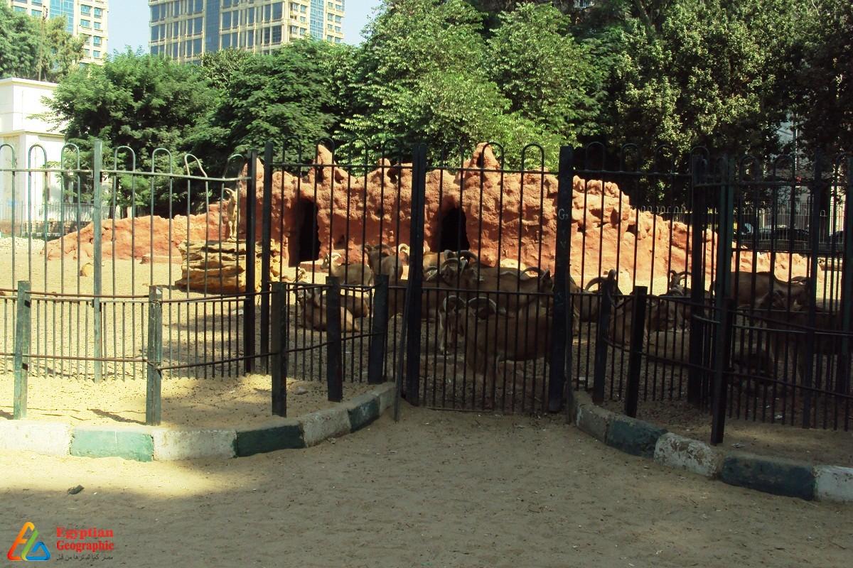 سباع البحر داخل الحديقة