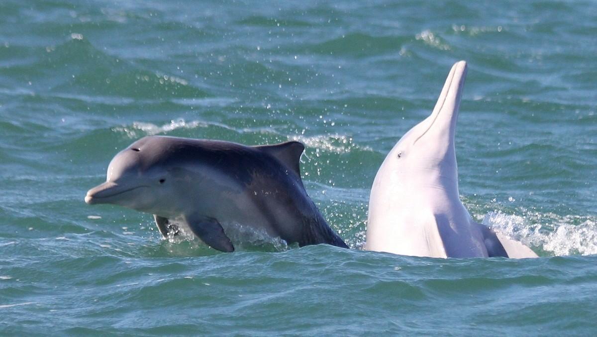 الدلافين في البحر الأحمر