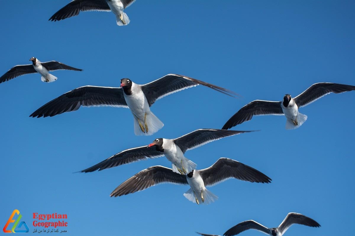 الطيور المهاجرة علي أحد الشواطئ المصرية