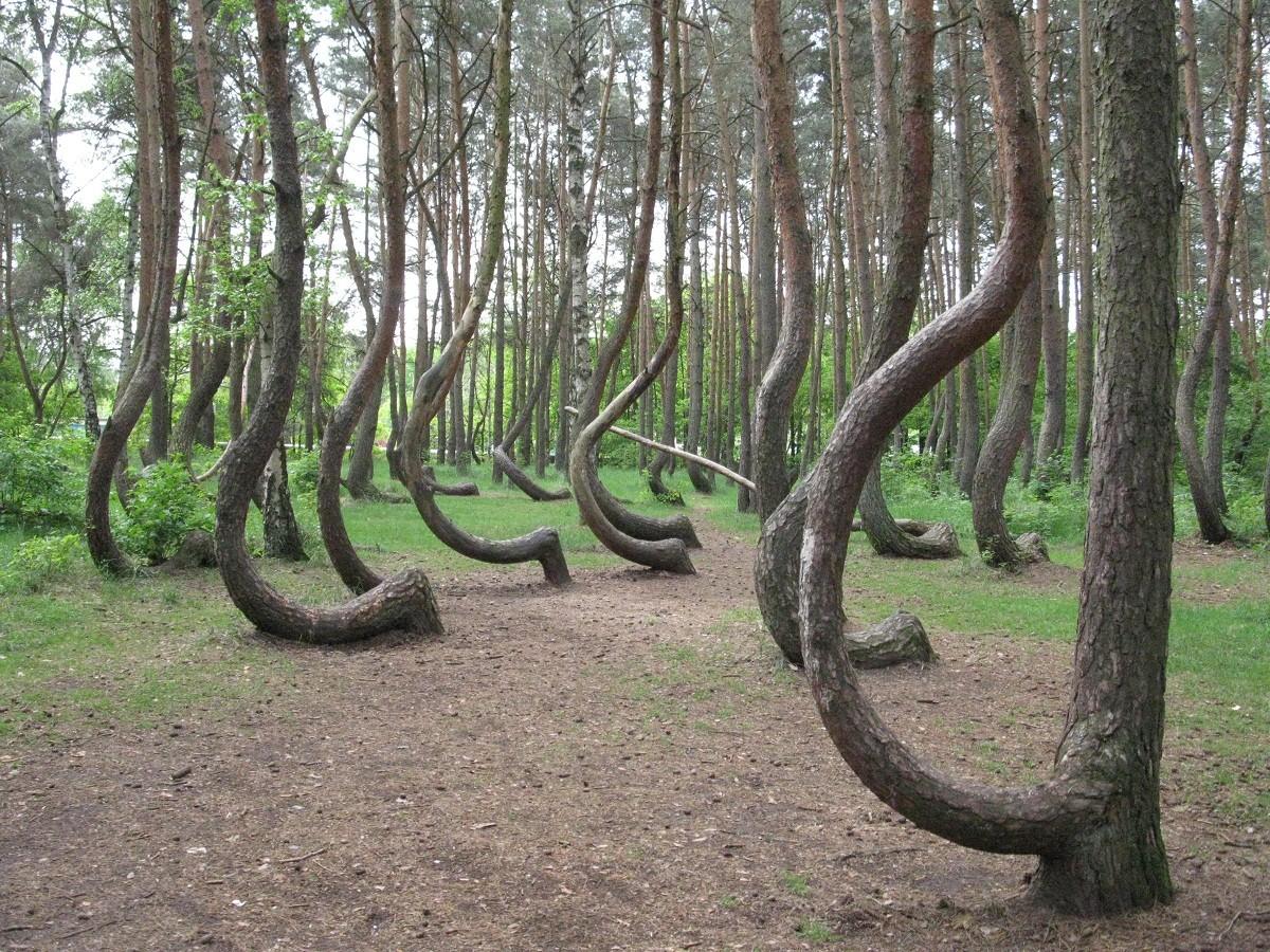 غابة الأشجار المعقوفة