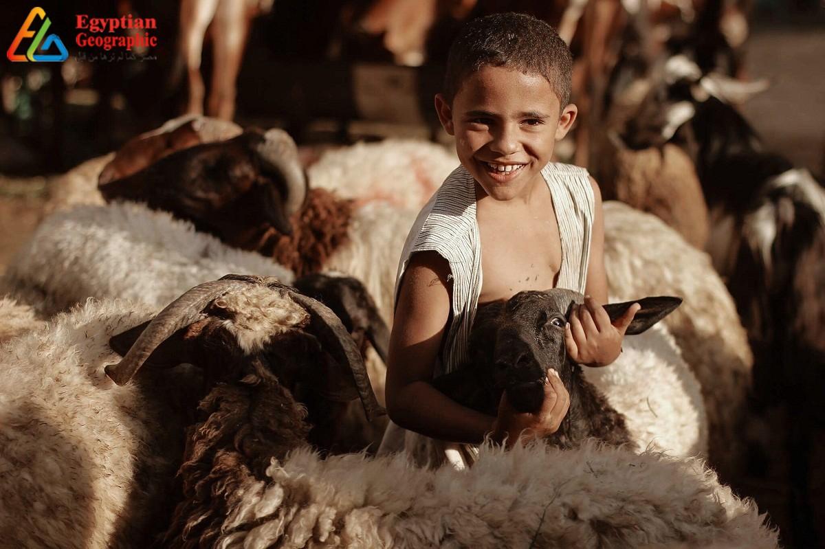 الأطفال وخروف العيد