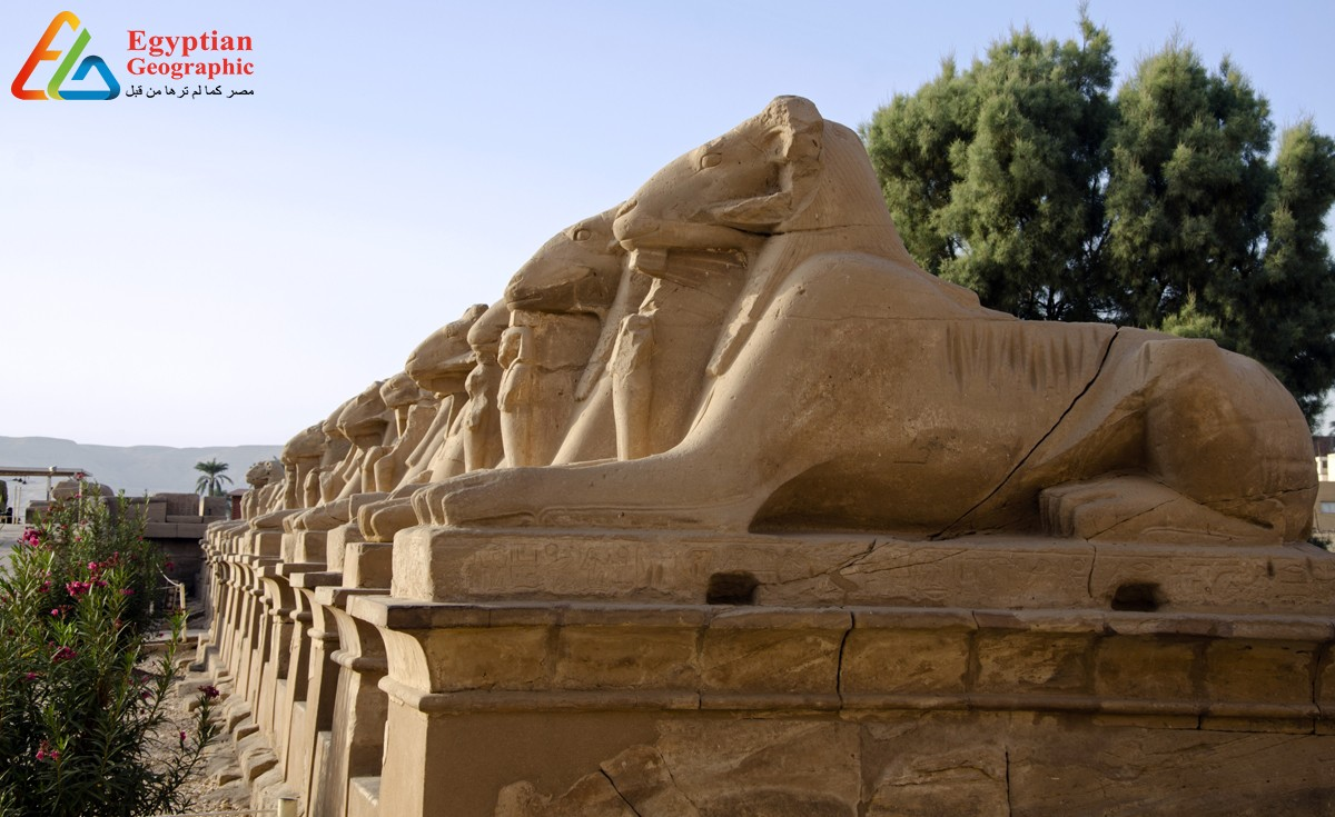 طريق الكباش والطريق إلي معبد الأقصر